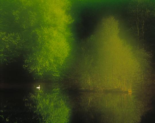 S�ngsvan, S�der�sens nationalpark